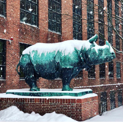 Snow rhino resized.jpg